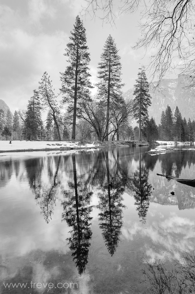 Trees reflecting in the Merced River. Yosemite National Park.