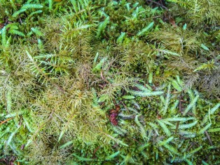 Moss at Putney Woods County Park