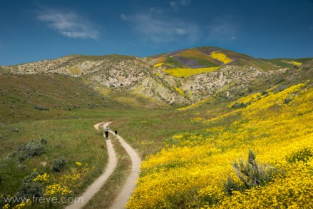 The Temblor Range. Carrizo Plain National Monument.