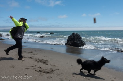 Carson fetching a stick at Pinnacle Gulch beach.