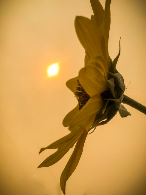 Smoky Sky with Sunflower and Sun